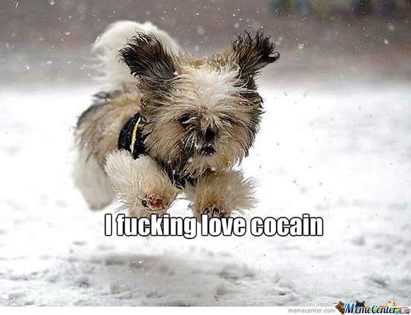Funny happy dog meme joke