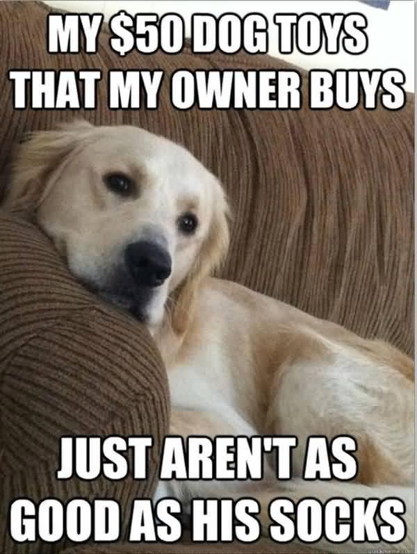 Funny new good dog meme image