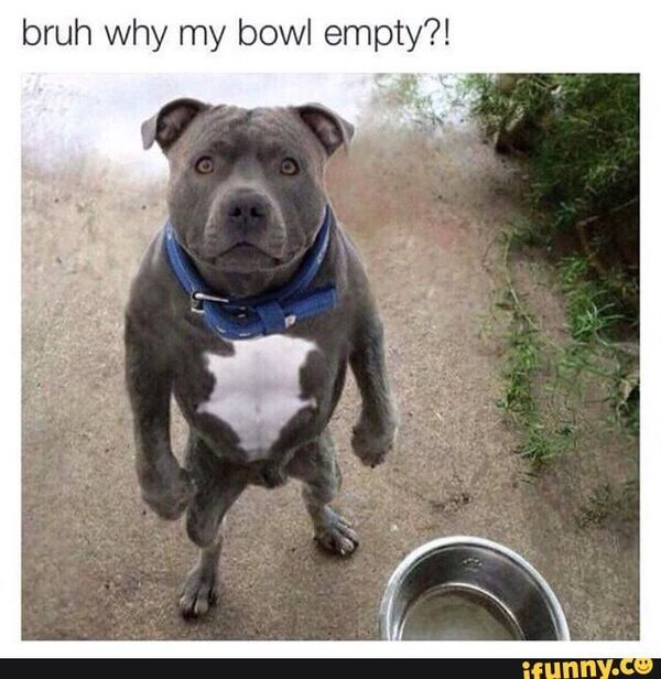 Funny silly dog meme picture
