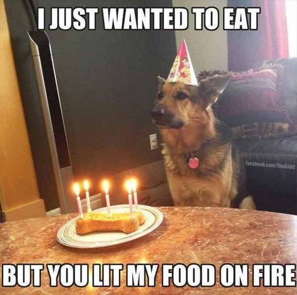 Funny silly dog meme pictures