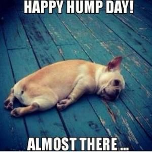 Hump Day Memes Happy Hump Day Almost There