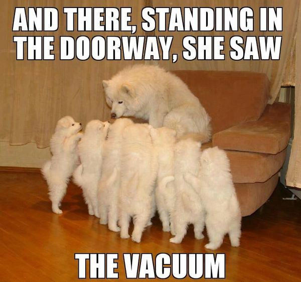 Hilarious funny dog memes joke