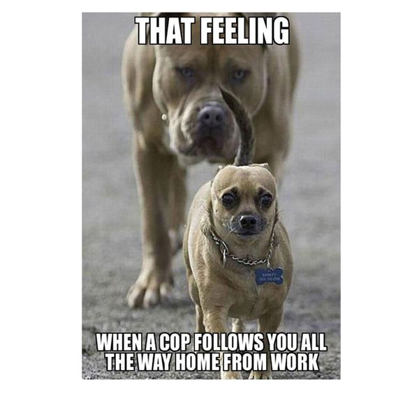 Hilarious funny puppy memes joke