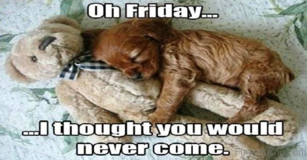 Oh Friday I Thought meme Pictures