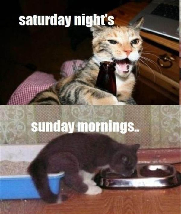 Saturday Funny Pictures Memes (3)