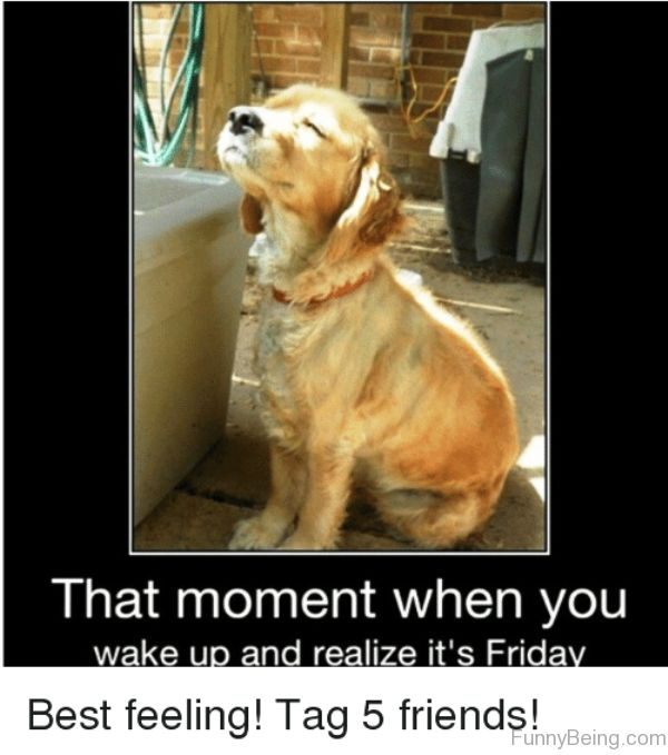 That Moment When You Wake Up Friday meme Images