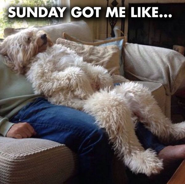funny sunday memes pictures