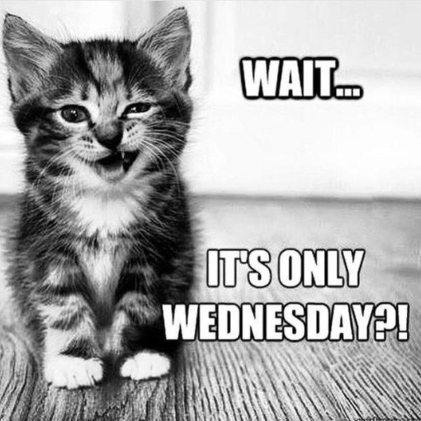 funny wednesday memes photo