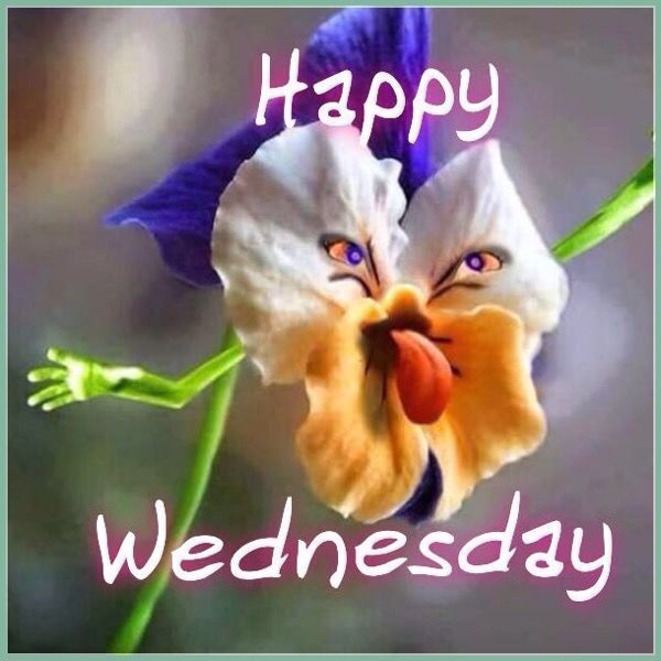 happy wednesday meme jokes