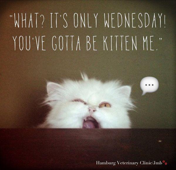 its Wednesday humor jokes
