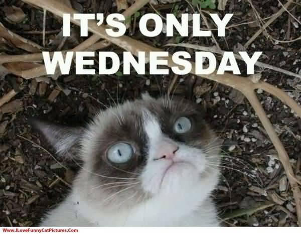 wednesday cat meme images