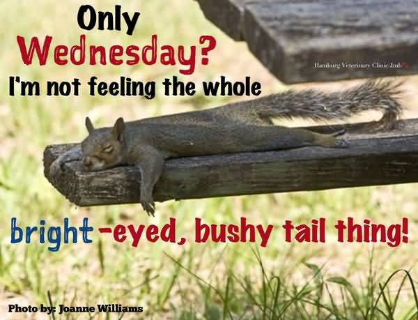 wednesday morning jokes pictures