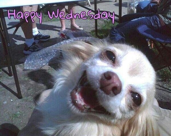 wonderful wednesday animal meme funny