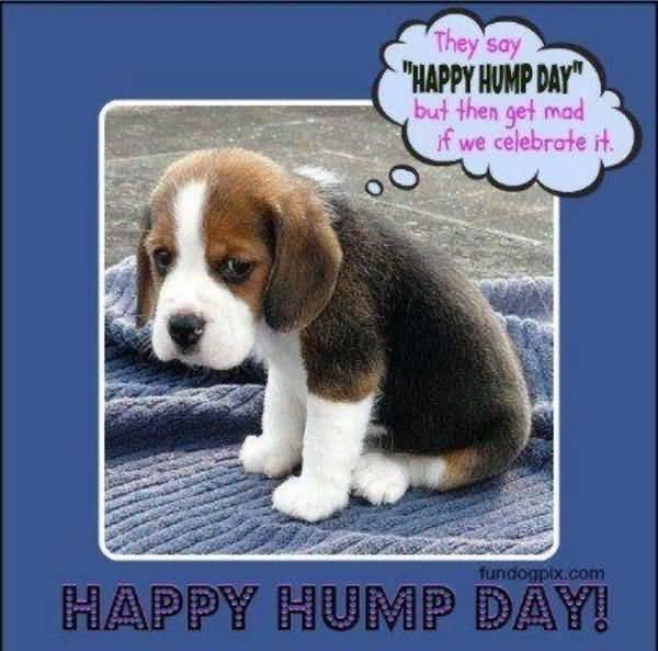 wonderful wednesday animal meme jokes