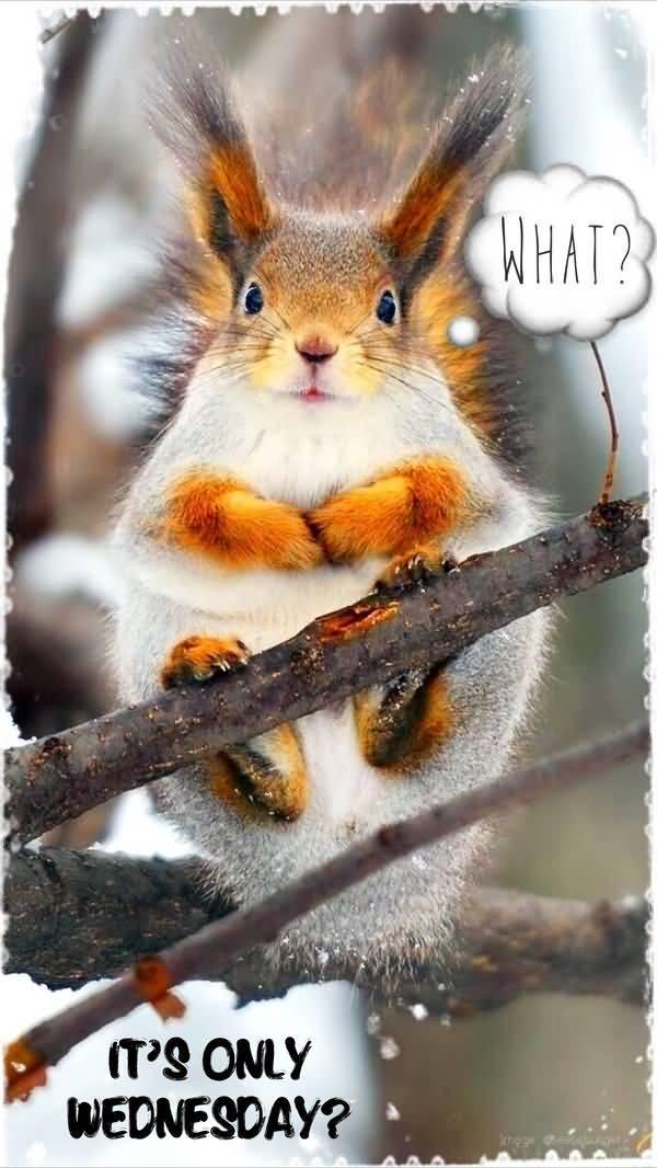 wonderful wednesday animal meme pictures