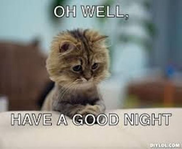 Funniest good night cat meme photo