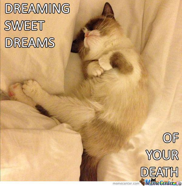 Funniest very cute sweet dreams meme image