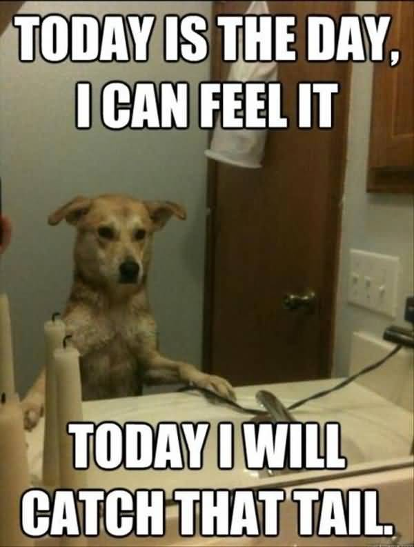 Funny Animal Quotes And Funny Memes Image