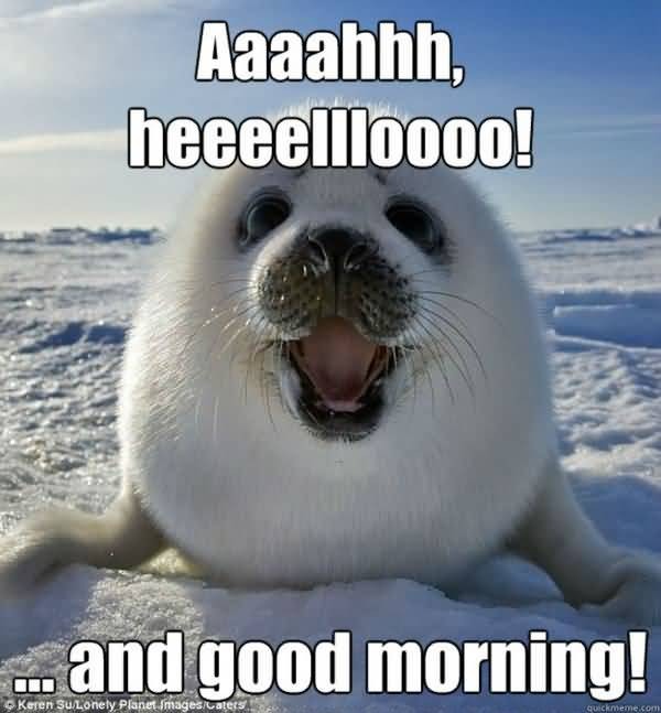 Funny Cute Good Morning Meme Image