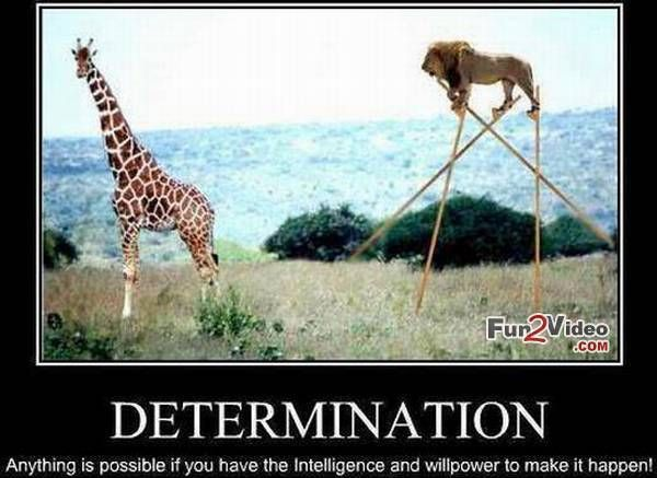 Funny Determination Funny Motivational Meme Photo
