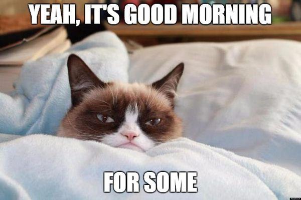Funny Grumpy Cat Good Morning Meme Joke