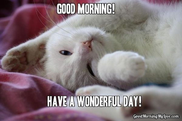 Funny Have A Wonderful Day Meme Photo