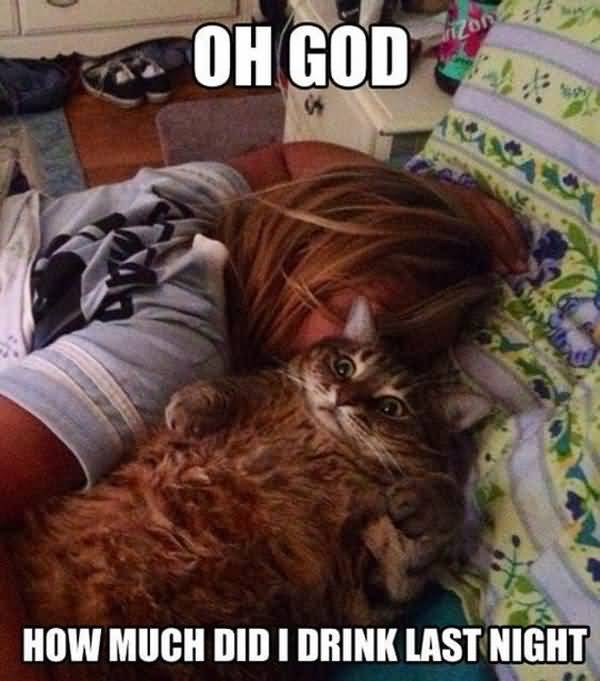 Funny bad hangover funny pictures jokes