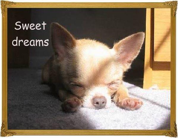 Funny best cute sweet dreams meme image