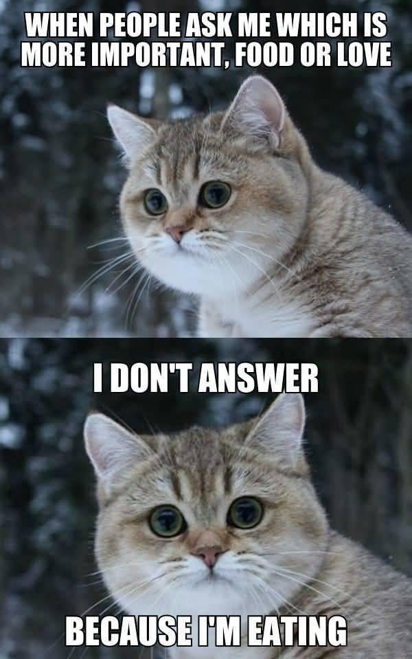 Funny cute fat cat meme jokes