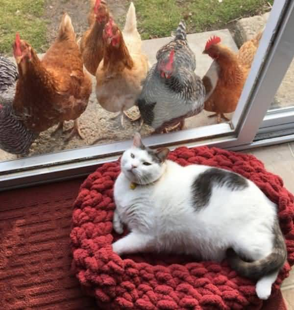 Funny fat cat images photo