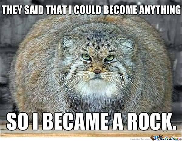 Funny fat kitten meme image