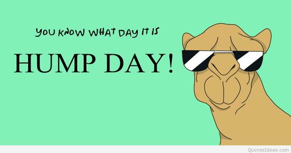 Funny happy hump day meme jokes