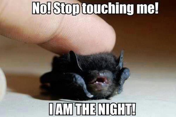 Hilarious best night meme image