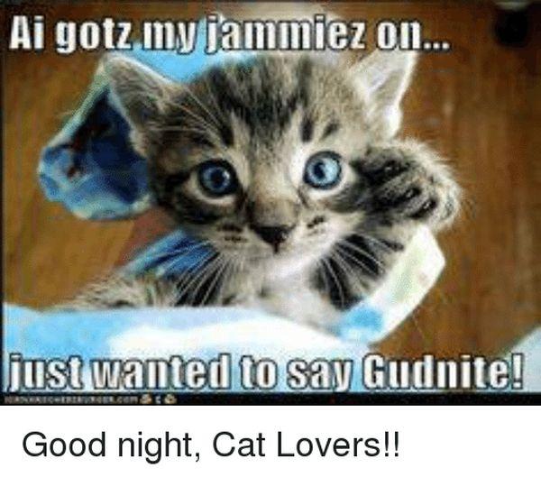 Hilarious cool good night cat meme image