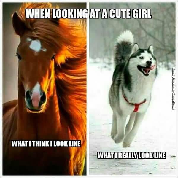 Hilarious funny flirting pics memes