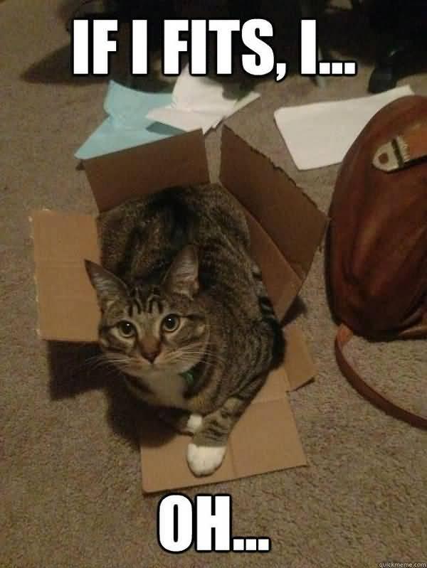 Humrous funny fat cat memes jokes