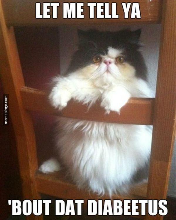 Humrous funny fat cat memes photo