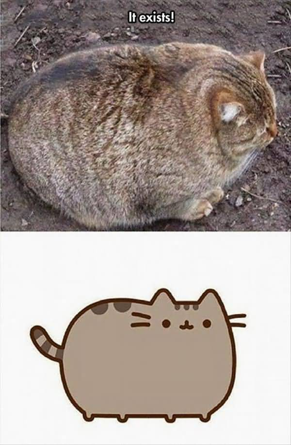 Humrous funny fat cat memes picture