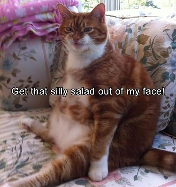Humrous funny fat cat pictures captions jokes