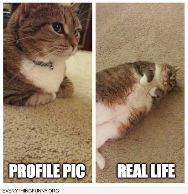 Humrous funny fat kitty pictures meme