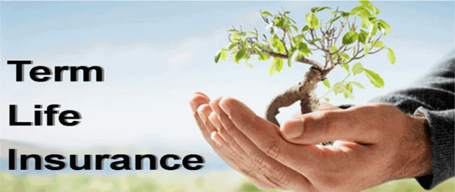 Life Insurance Term Quote 10