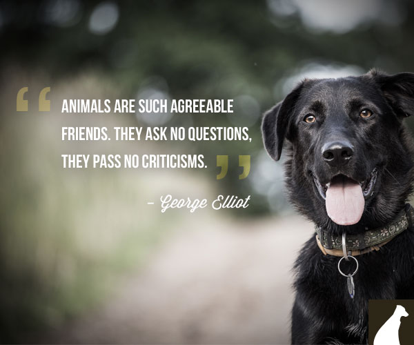 Quotes About Dog Friendship 13