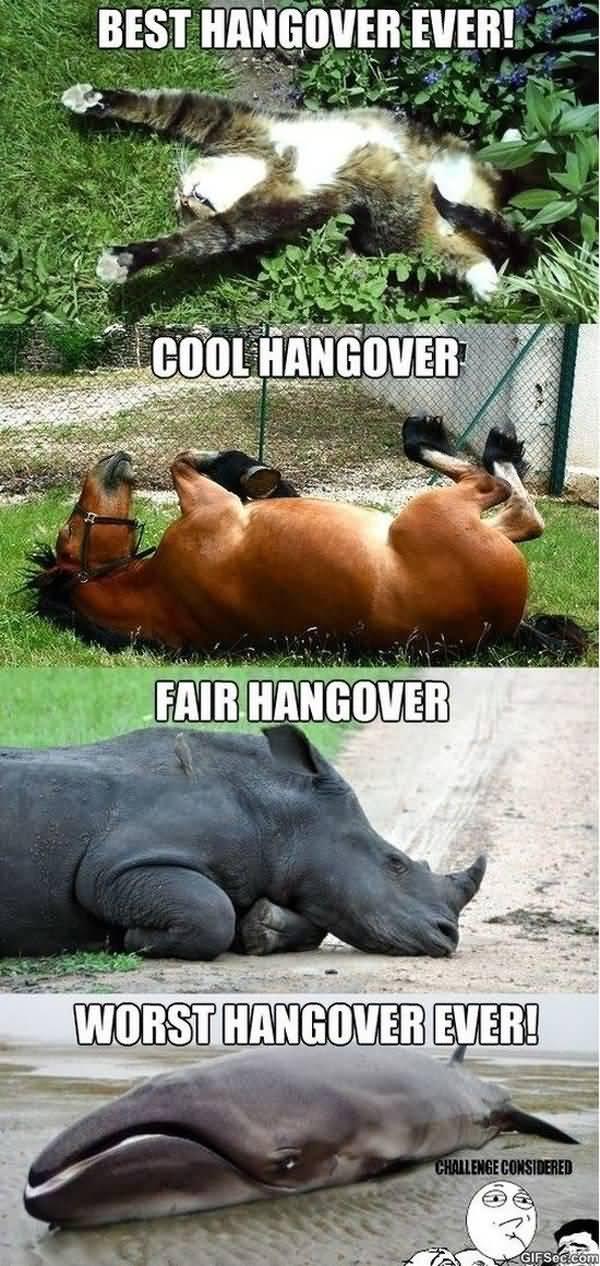 Very funny hang over pics image