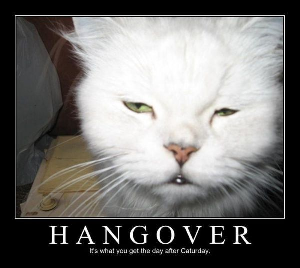 Very funny hang over pics memes