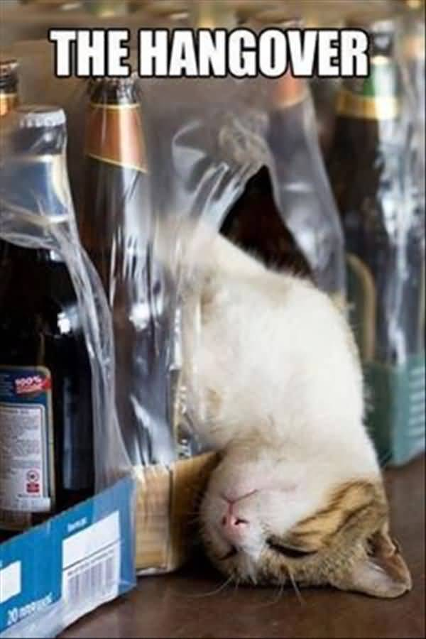 Very funny hangover pictures gif