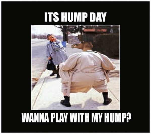 Very funny hump day memes image