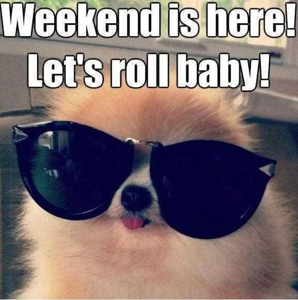 Amusing Weekend Is Here Funny Pictures Joke
