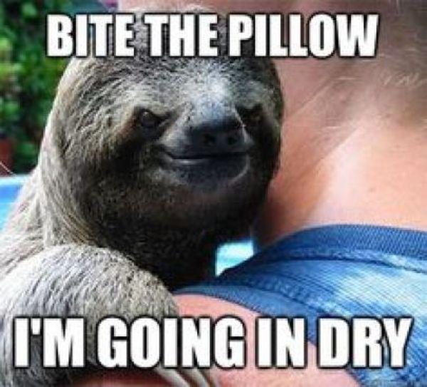 Amusing dragon sloth meme picture