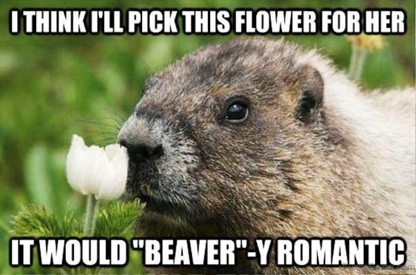 Amusing romantic memes joke