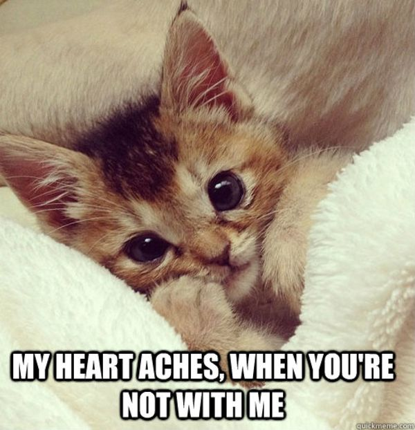 Amusing sweet love memes for her joke